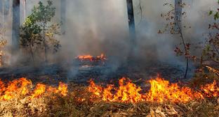 Высокий уровень пожарной опасности объявлен в четырех районах Чечни