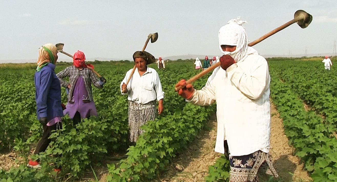 Cotton growers, Saatli District. Photo: Meydan-TV