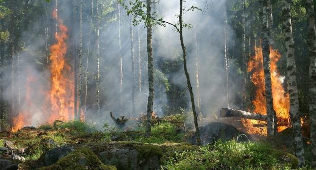 Крупный лесной пожар произошел в Абхазии