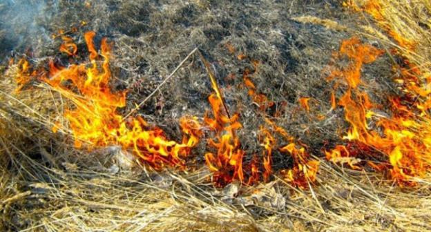 Четыре человека задержаны по подозрению в поджоге лесов на Кубани