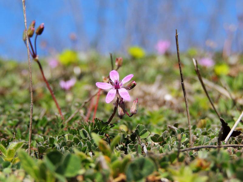 Самые первые весенние цветы в лесу - Ладъ. рф
